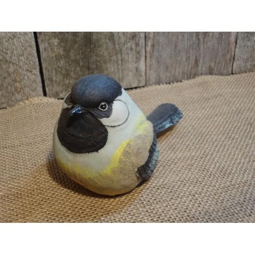 Oiseau m sange t te for Oiseau tete noire